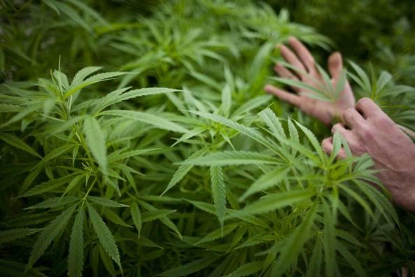 Uruguay: la Camera dei deputati legalizza la vendita di marijuana