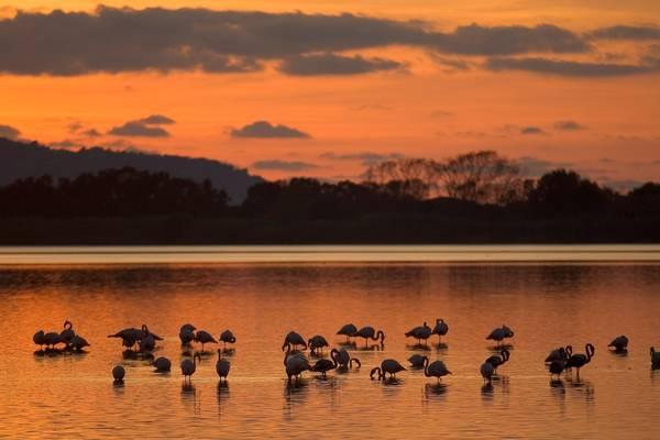 NATURA / Ministero dell'Ambiente, varata la Strategia nazionale per la biodiversita'