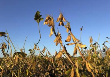 Campo di soia transgenica (JUAN MABROMATA/AFP/GettyImages)