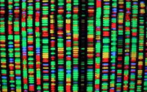 Genoma umano (Getty Images)