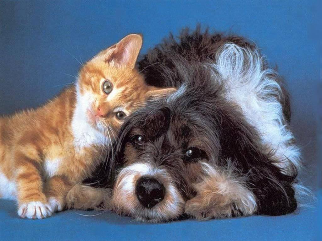 Chi Ama I Gatti è Più Intelligente Di Chi Ama I Cani Lo Rivela Uno