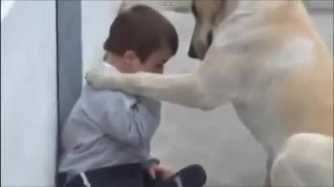 img-dog-determined-to-make-friends-with-boy-with-down-syndrome-2831