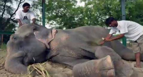 Elefante Raju (screen shot youtube)