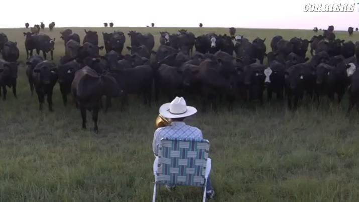 Mandria di mucche incantata dal suono di una tromba!