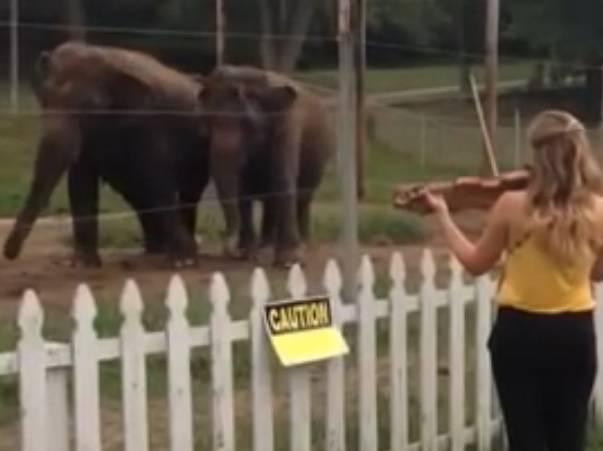 Il video degli elefanti che danzano sulle note di Bach
