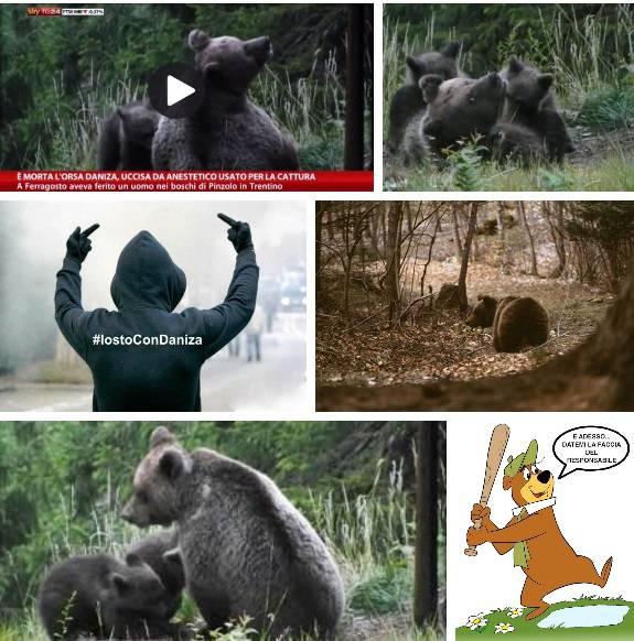 La morte dell'orsa Daniza e l'infelice tweet di Bruno Vespa