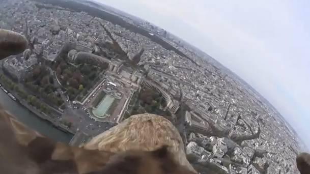 Il volo di un'aquila sopra Parigi (Video)