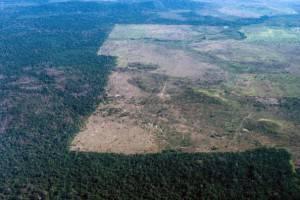 Deforestazione dell'Amazzonia (Getty images)