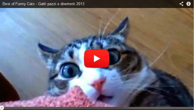 Gatti Completamente Fuori Di Testa Video Direttanewsit