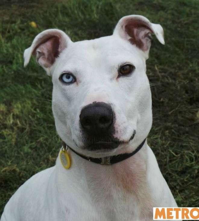 Buddy, il cane 'maledetto' che nessuno vuole adottare: ecco il perché –FOTO
