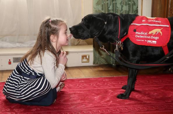 Medical Detection: i cani che captano le malattie gravi
