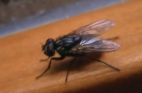 Larve di mosca depositate in un occhio: è successo davvero!