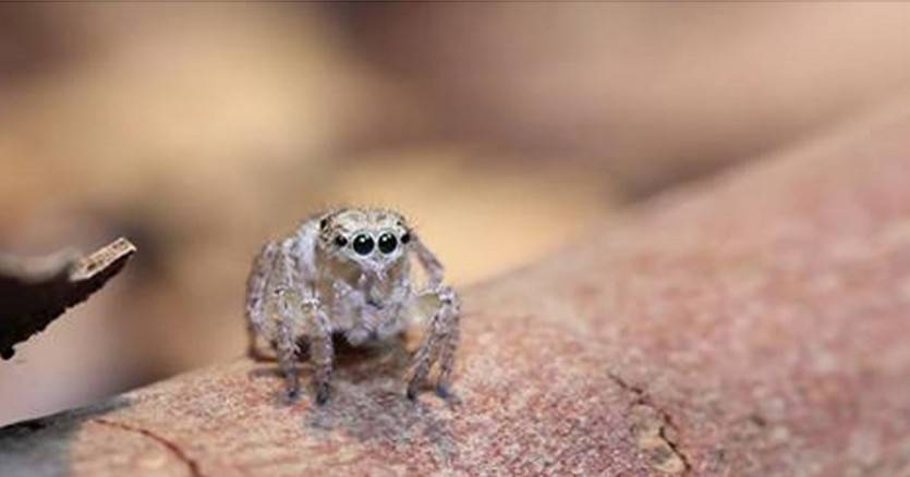 This-Spider-Looks-Totally-Normal-But-When-It-Started-Moving-You-Wont-Stop-Watching