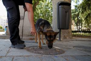 Cane poliziotto condanna