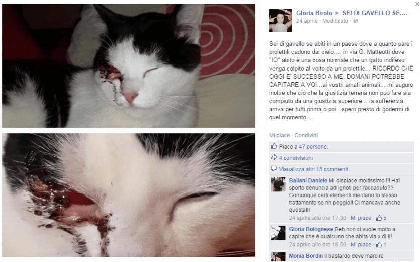 gatto facebook-3