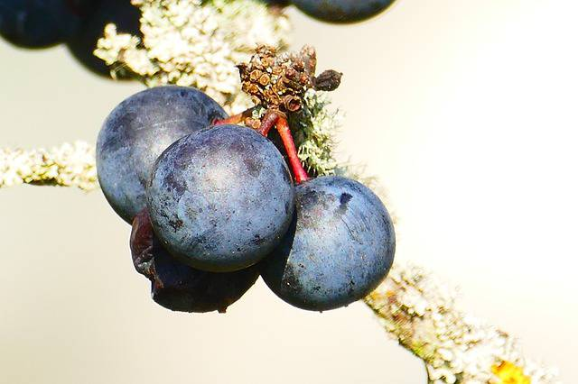 Prunus, una pianta per sconfiggere i tumori