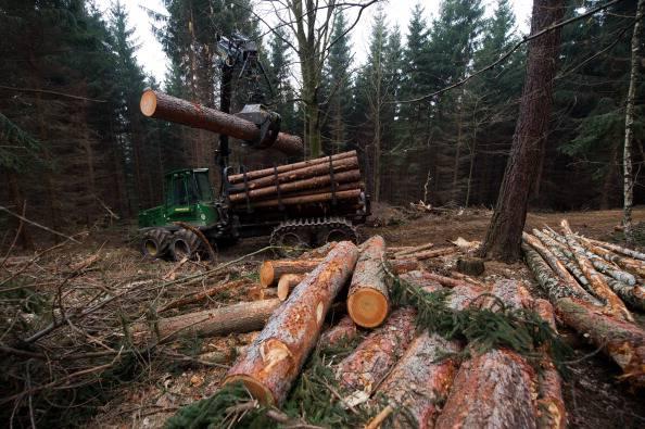 Arezzo: operaio travolto e ucciso da un tronco d'albero