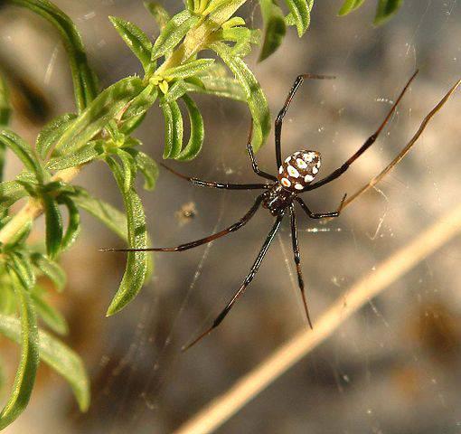 Sardegna: turista gravissimo per il morso di un ragno