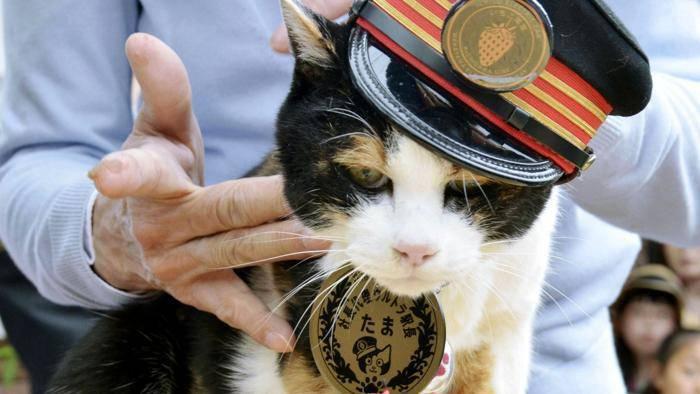 """In tremila al funerale di Tama, gatta e """"dea"""""""