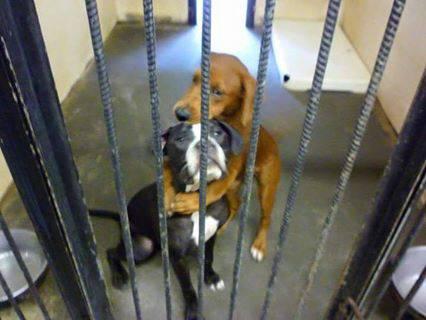 Due cani si abbracciano prima di essere soppressi: il loro gesto gli salva la vita –FOTO
