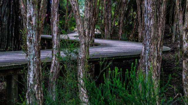 Giallo a Pesaro Urbino: 17enne trovato sgozzato in un dirupo