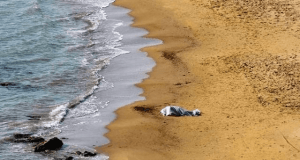 Cadavere in Spiaggia (foto generica)