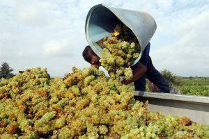 Carburante green, la benzina si ricava dall'uva.