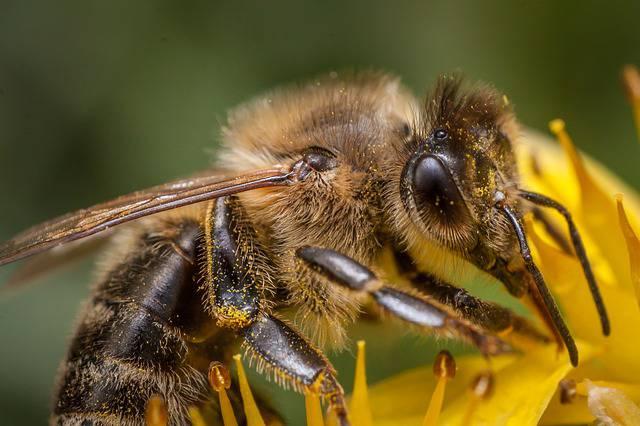 Allarme estinzione api, un micro chip Intel ci dirà perchè