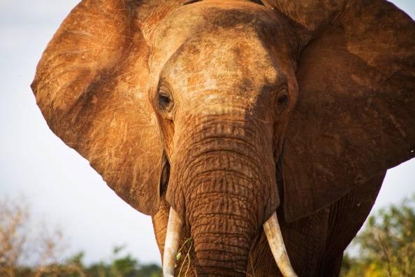 Viareggio: festa sullo yacht… con elefante