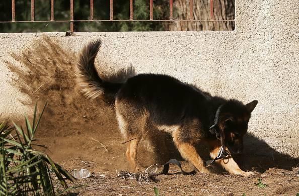 Aizza i cani contro il suo aggressore e sventa lo stupro