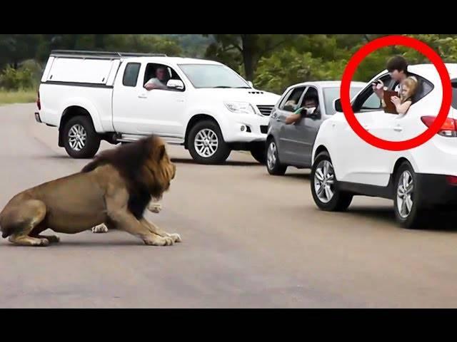 Due bimbi si affacciano per fotografare il leone: meglio non farlo –VIDEO