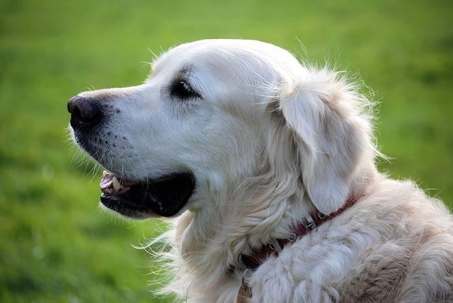 Avere un cane aiuta a vivere meglio