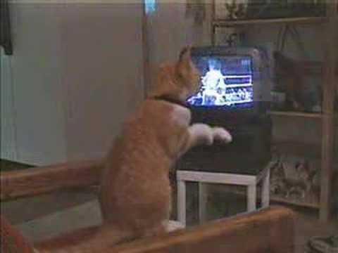 Il gatto fa la boxe (e non scherza) -VIDEO