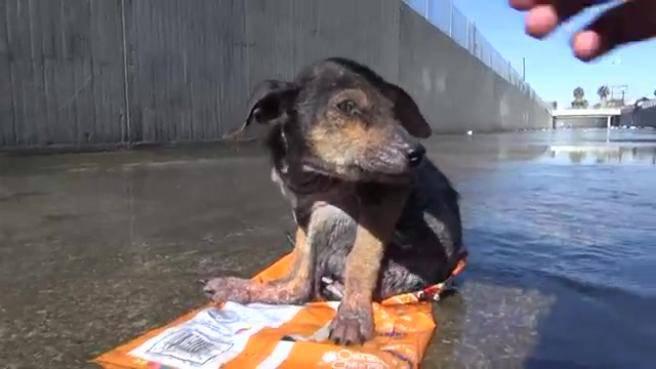 Abbandonato in fin di vita, cane viene salvato e trova una casa – VIDEO
