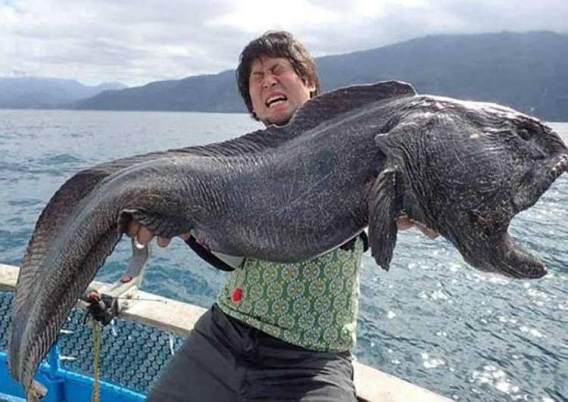 pescato-pesce-lupo-gigante-in-giappone