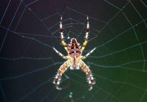A spider sits in the centre of its web in a garden in Karlsruhe, Germany, on September 21, 2013.   AFP PHOTO / DPA / ULI DECK /GERMANY OUT        (Photo credit should read ULI DECK/AFP/Getty Images)