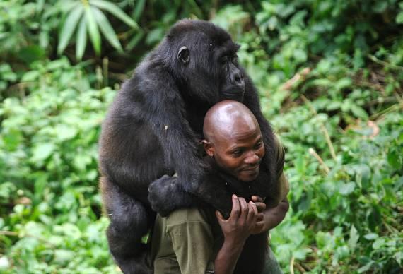 Il ranger e il gorilla (foto dal web)