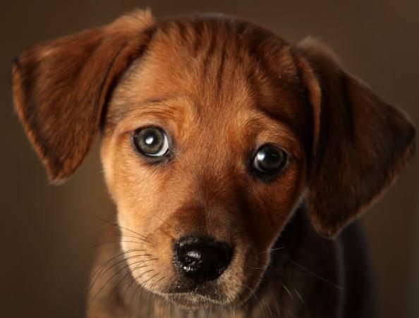 Pronta una nuova tassa sul possesso dei cani