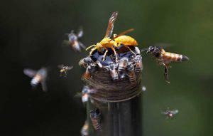 Calabroni. (Photo by Raj K Raj/Hindustan Times via Getty Images)