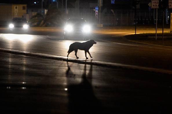 Cane per strada (Pascal Le Segretain/Getty Images)