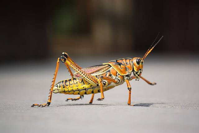 Mangiare insetti fa bene al cervello