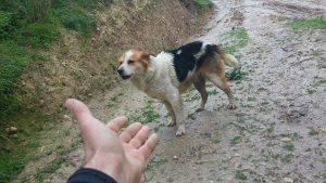 takis salva cani grecia
