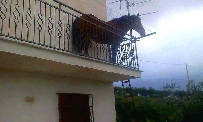 cavallo balcone