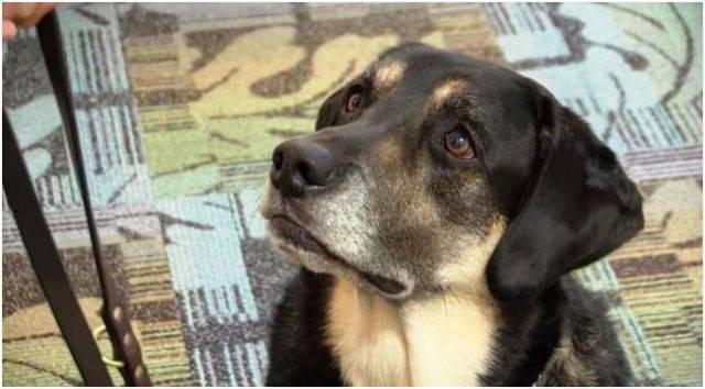 Joe, il mistero del cane che salva le persone dal suicidio – VIDEO