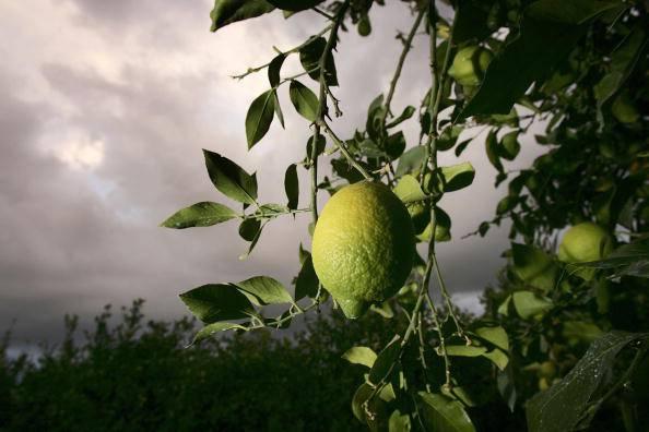 Limone: 5 utilizzi utili per salute e bellezza