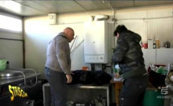 Il servizio tv sul canile di Veronesi (screenshot)