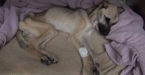 La rinascita di Angel, la cagnolina salvata dai volontari (Video)
