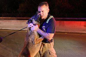Il cane bacia il pompiere che l'ha salvato dal fiume