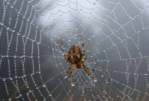 Viene morso da un ragno e non si fa curare, muore delirando