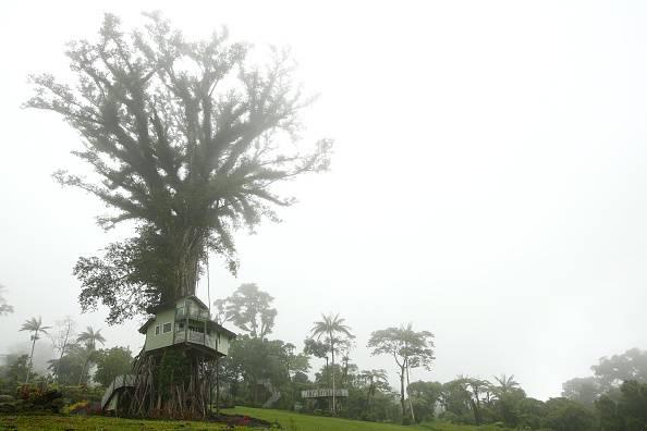 """La misteriosa """"casa"""" sull'albero a Sant'Antimo"""